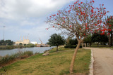 Haifa-Park-Kishon_23-3-2013 (18).JPG