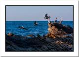 January 16th, Morrow Bay California