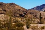 February 26th, Arizona