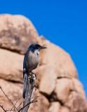February 14th, Joshua Tree National Park