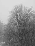 Snow, Krailling