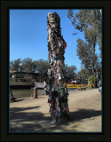 Thong tree  Echuca  -  series of three images