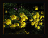 Springtime gold
