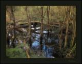 Bald Hills wetland reserve