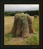 Sheaves of hay