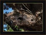 Very unusual Spider's Web