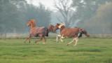 268:366Wild Horses