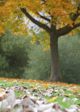 277:366Autumn Leaves