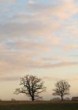 323:366Every December Sky