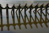 Pole Reflection .jpg