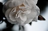 20130203 / petal
