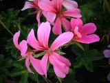 20130226 / pink