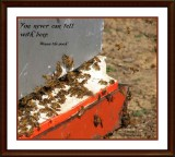 You never can tell with bees....