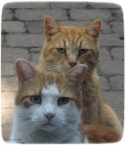The Red Boyz;  Give us the treats... or else!