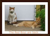 The red boyz are back...
