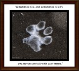 You never can tell with paw-marks