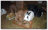P1000154-knopf-mimi-leo-james-puck-sm.jpg