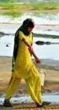 Yellow young water bearer
