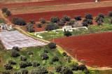 Mediterranean Red Fields