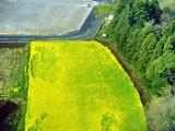 Yellow Fields of Japan