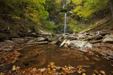 Swirling Leaves at Plattekill Falls
