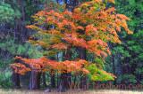 Autumn Variations