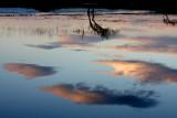 Cielo nella palude
