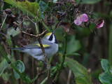 Birdtrip, Azores Oct  2012