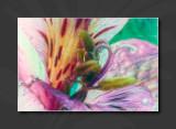 2013 - Watercolours, Digital Painting