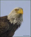 eagle portrait.jpg