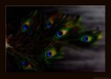 D701_6147_1012-Feathers.jpg