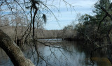 Wintertime in the Choctawhatchee SwampsVIDEO