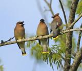 Tree Gatherings