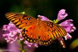 Butterfly November 6