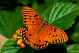 Butterflys In November