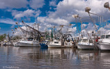 Shrimp Boats November 12