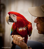 Red Macaw January 20