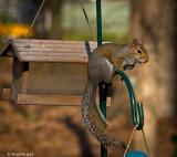 Squirrel March 1