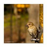Tweety Bird March 9