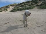 Cornwall-Portreath 2012_121909_8097.jpg