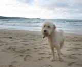 Cornwall-Portreath 2012_122209_8031.jpg