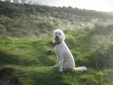 Cornwall-Portreath 2012_122209_8037.jpg