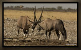 africa36.jpg