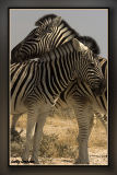 africa44.jpg