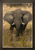 africa51.jpg