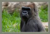 Melbourne Zoo 2013