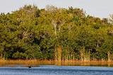 Ninemile Pond
