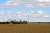 Shark Valley region of the Everglades