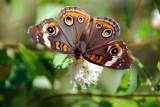 My Butterfly Garden ~ 2012