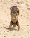 Squirrel-Nauts.jpg